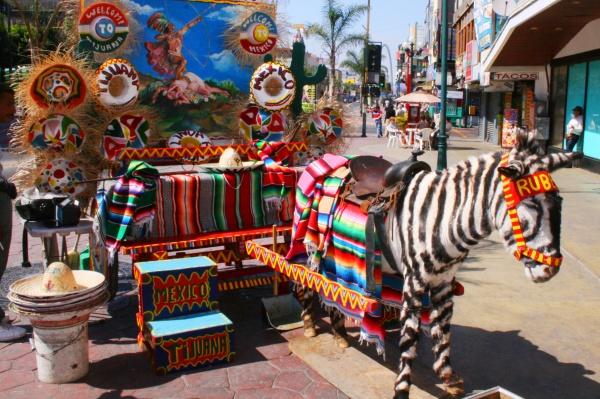 Tijuana-Zebra
